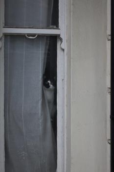 Katt som tittar ut nyfiket!