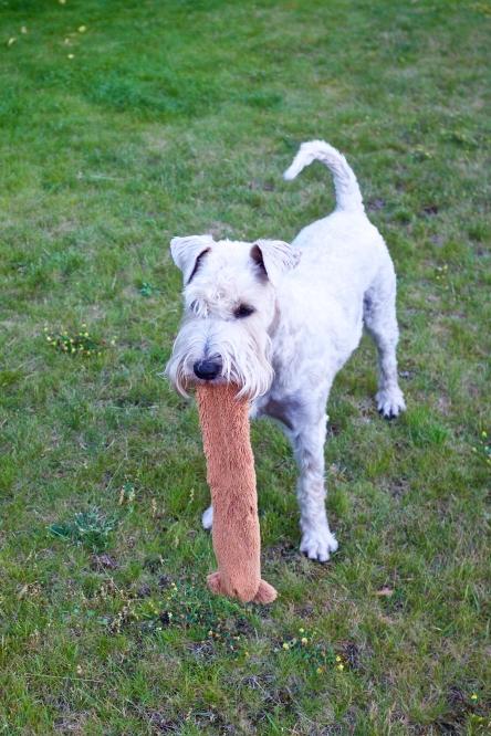 Visst ser det ut som om Linus fått en extra lång tunga? :-)