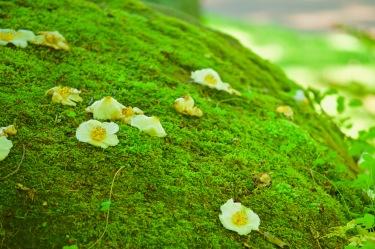 Botaniska trädgården - ser ut som förlorade ägg...
