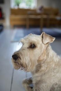 Kivik - Linus