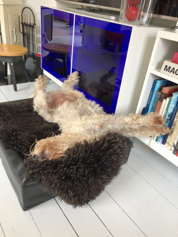 Linus sovstil:-)